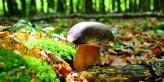 sbírání hub v Anglii a Velké Británii