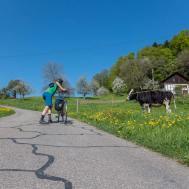 Selbst die Kühe haben Mitleid: Nach Teufenthal gehts ein kurzes Stück mit fast 17 Steigungsprozenten aufwärts. | © 2018 Dominik Thali
