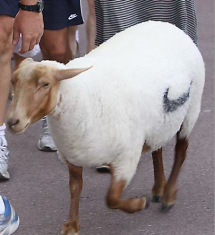 Nike not only make contentious videos featuring LA, they also sprayed their logo on a sheep, and let it loose on the streets. We'll let you be the judge of this.