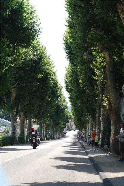 Beautiful tree-lined avenues aplenty in this part of the world. It's lovely here.