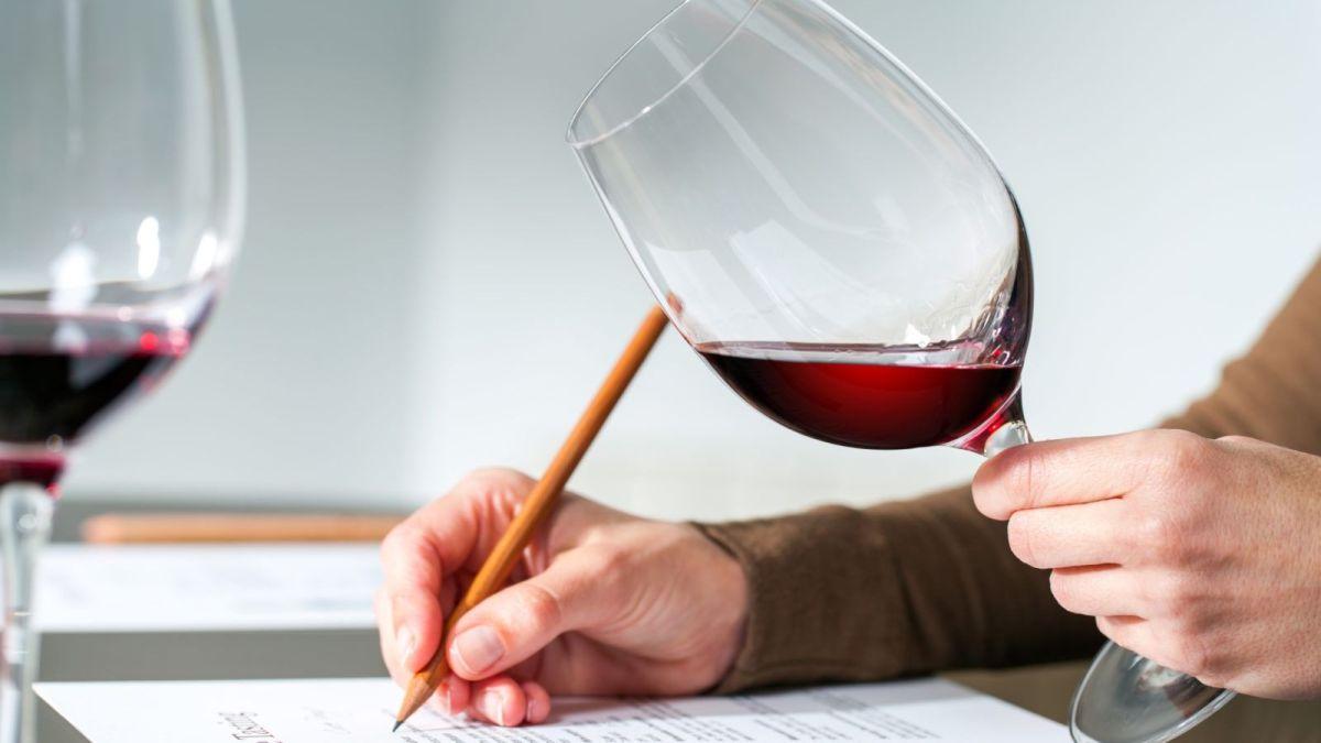 5 formas de aprender sobre vinho sem pagar nada