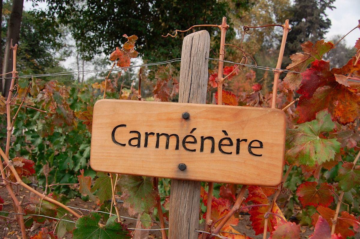 Características do vinho Carménère