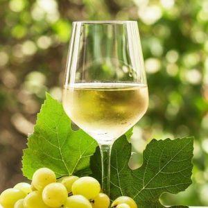 Taça de vinho Sauvignon Blanc
