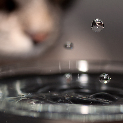 Cat looks at water droplet