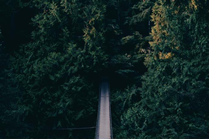Un camino que lleva al interior del bosque.