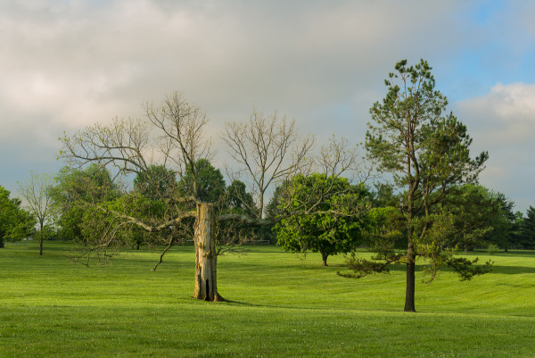 The Kirklevington Oak