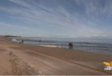 ripascimento spiaggia jesolo