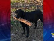 Enpa di Mira: 50 cani recuperati nella notte di Capodanno