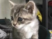 VIDEO: Roberto Martano: aumentano i gattini abbandonati - Televenezia