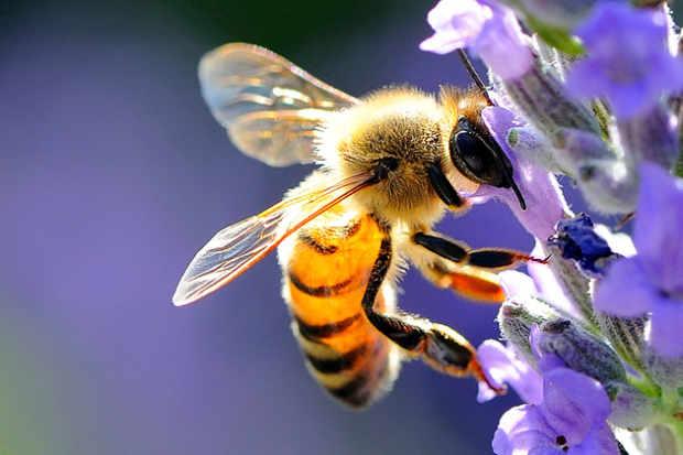 Musile di Piave: comune si mobilita a salvaguardia delle api