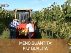 TG Veneto: le notizie del 27 agosto 2019