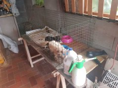 Cuccioli maltrattati e venduti via web con truffa: due denunciati
