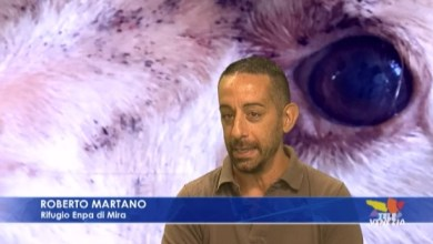 Intervista a Roberto Martano responsabile dell'Enpa di Mira