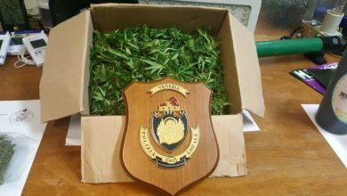 Maxi sequestro una serra per la produzione di marijuana.