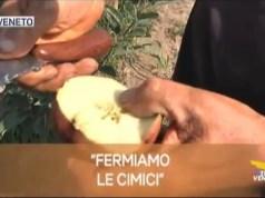 TG Veneto: le notizie del 18 settembre 2019