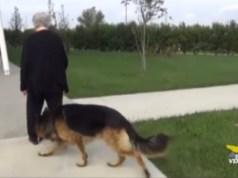 Alzheimer: cani addestrati a ritrovare le persone scomparse