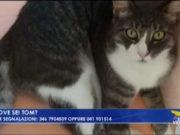 Appello per Tom, il gatto scomparso