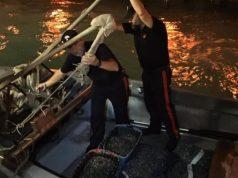 Pescatori in fuga sequestrati 300 kg di novellame di vongole