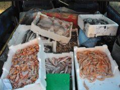 330 kg di pesce