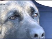 Thiene: gli spacciatori piangono la morte del cane antidroga