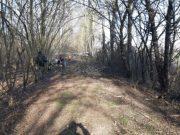 Bosco del Parauro: al via la sistemazione dei sentieri e degli alberi - Televenezia