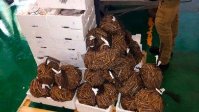 Sequestrati 170 chili di pesce: erano di provenienza sconosciuta - Televenezia