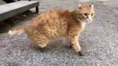 Ryznik il gatto dalle zampe congelate,
