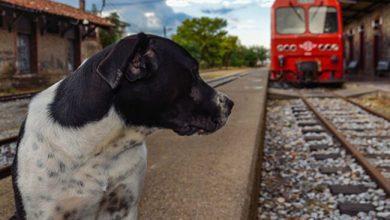Cagnolino scappa da casa e sale su un treno: storia a lieto fine