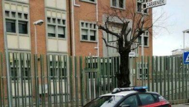 Ruba in un negozio di toelettatura di Chioggia: arrestato 20enne