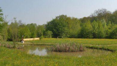 Il Bosco di Carpenedo riapre per la primavera