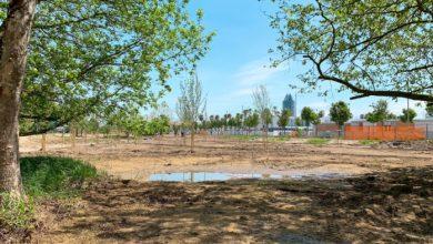 A Jesolo nuove aree di riforestazione per quasi 3 ettari - Televenezia