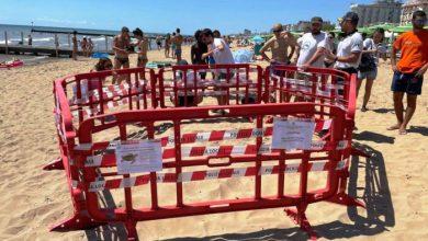 Tartaruga marina depone le uova sulla spiaggia di Jesolo