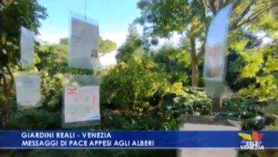 Venezia Pesce di Pace: messaggi di pace appesi agli alberi