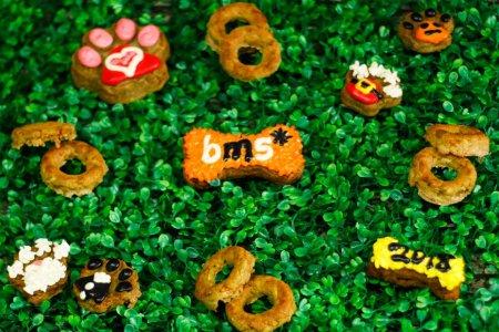Celebra la vida de tu mascota con Paws Party Bakery
