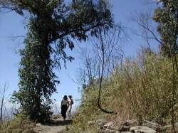 Los primeros árboles que anuncian el cambio de vegetación