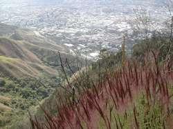 Las hierbas rojas que en una época del año le dan un color muy especial al Ávila