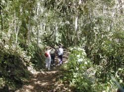 La selva profunda que conduce hasta la quebrada Tocomé
