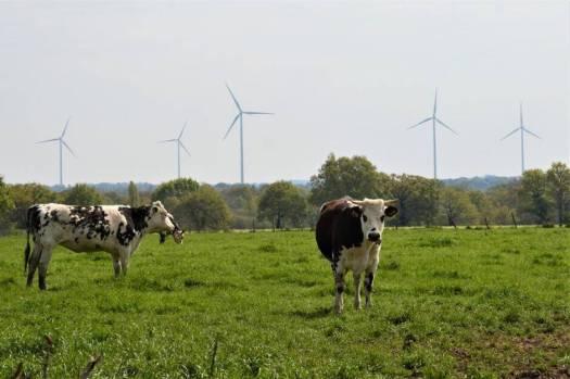 Éoliennes et mortalité de betes a Nozay