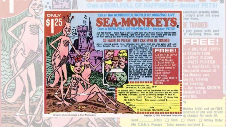Adv scimmie di mare