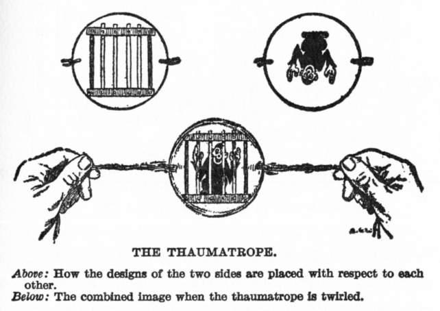 Rappresentazione grafica di un taumatorpio.