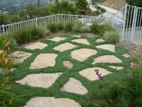 Carpet Like Groundcover and Pavers