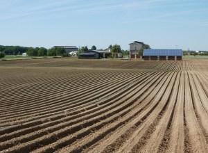 fields-837629_640