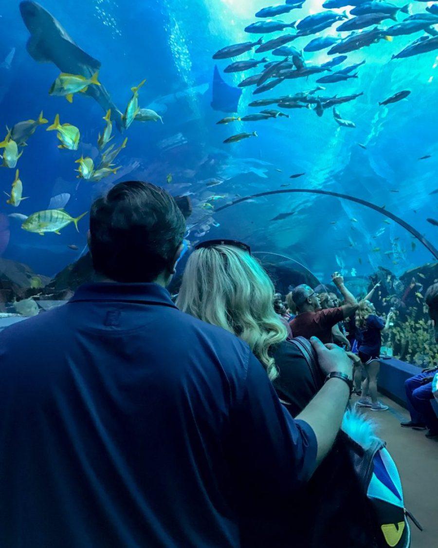 Georgia aquarium centennial district Atlanta blogger