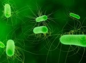 systemen natuur bacteriën samenwerken vergelijk mensen