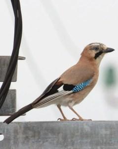 oiseau sur un poteau electrique