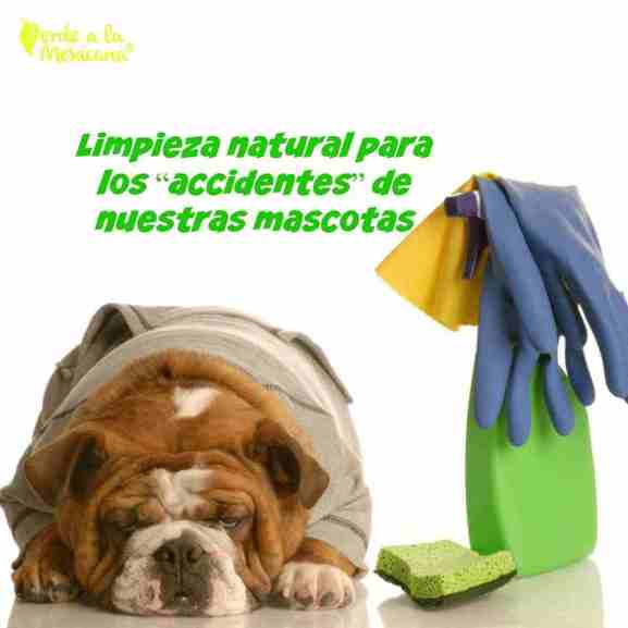 como limpiar el patio de las mascotas