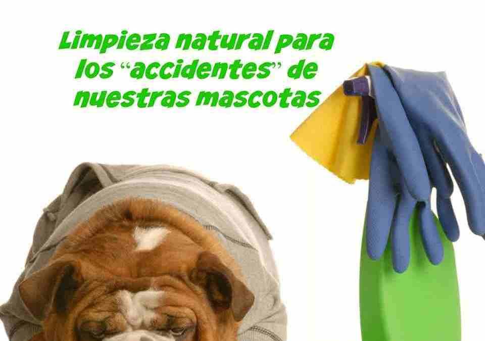 Cómo limpiar el patio de las mascotas