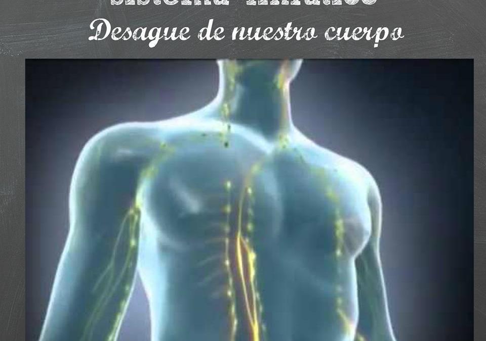Sistema linfático: drenaje de nuestro cuerpo