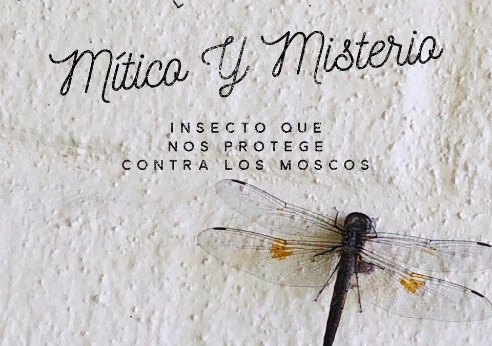Libélula, protección contra los moscos