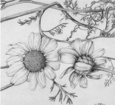Curso de Dibujo botánico